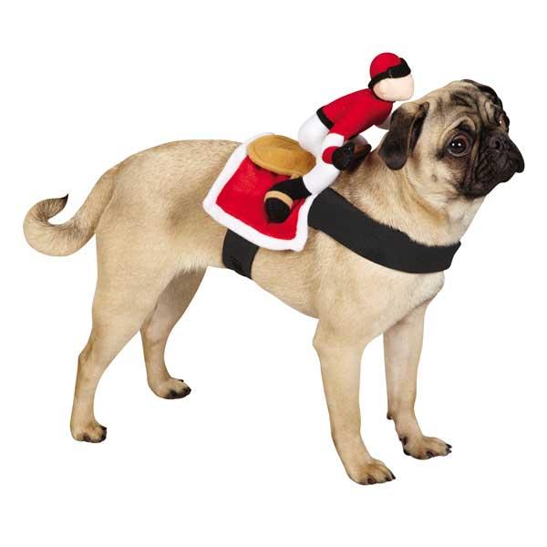 Jockey Dog Rider Pet Costume Sale