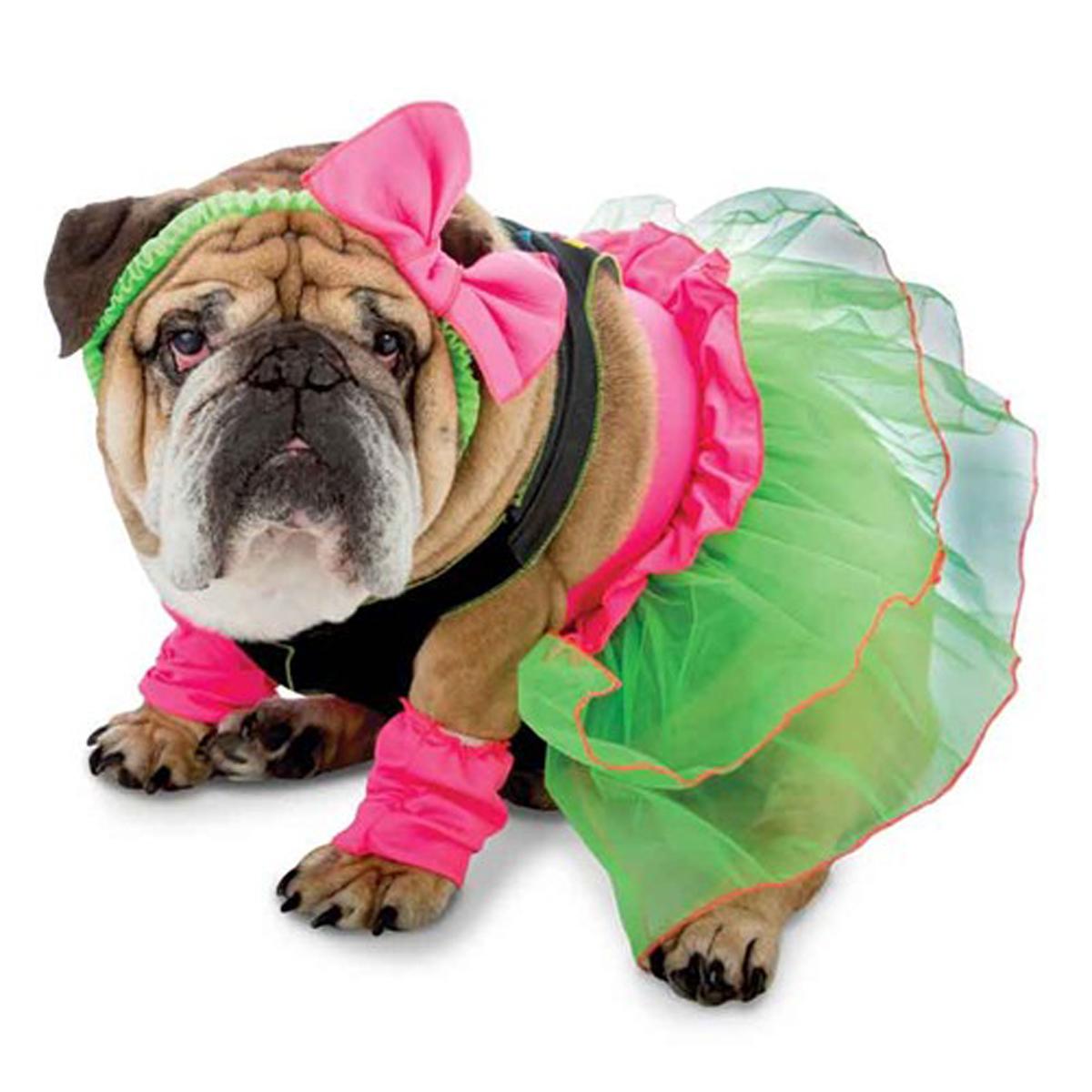 Zelda 80's Party Halloween Dog Costume