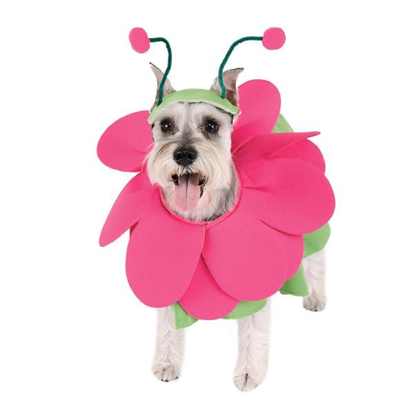 Zelda Bloomin' Snout Halloween Dog Costume