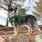 View Image 4 of American River Ultra Choke-Free Mesh Dog Harness - Green
