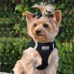 View Image 1 of American River Ultra Choke-Free Mesh Dog Harness - Black