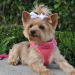 View Image 1 of American River Ultra Choke-Free Mesh Dog Harness - Honeysuckle Pink