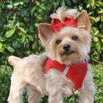View Image 1 of American River Ultra Choke-Free Mesh Dog Harness - Red
