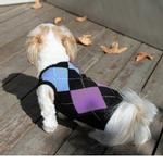 Argyle Sleeveless Dog Sweater by Gooby - Blue