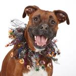 View Image 1 of Aria Halloween Sparkle Dog Scrunchy