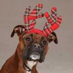 View Image 1 of Aria Holiday Tartan Pet Antlers