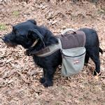 View Image 1 of Aussie 2 in 1 Backpack Harness