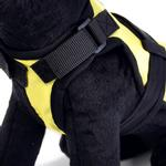 View Image 2 of Avant Garde Dog Harness - Somewhere Up There