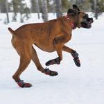 View Image 3 of Polar Trex Dog Boots by RuffWear - Red Rock