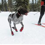 View Image 7 of Polar Trex Dog Boots by RuffWear - Red Rock