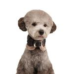 View Image 1 of Barron Neckguard Dog Collar by Puppia - Gray