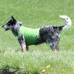 View Image 2 of Basic Tank Dog Shirt - Parrot Green