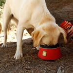 View Image 1 of Bivy Travel Dog Bowl By RuffWear - Red Currant