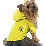 View Image 1 of Bumble Bee Raincoat - Yellow
