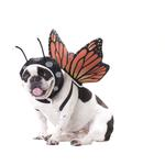 View Image 1 of Butterfly Dog Costume