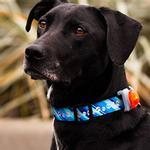 View Image 1 of Canine Safety Light Collar Attachment - Orange