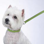 View Image 2 of Casual Canine Flat Leather Leash - Parrot Green