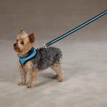 View Image 2 of Casual Canine Mesh Dog Harness - Pastel Blue