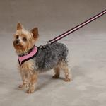 View Image 3 of Casual Canine Mesh Dog Harness - Pastel Pink