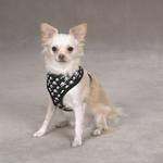 View Image 1 of Casual Canine Skull & Crossbone Harness - Black