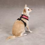 View Image 2 of Casual Canine Skull & Crossbone Harness - Red