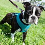 View Image 1 of Cirque Dog Harness - Teal Air Mesh