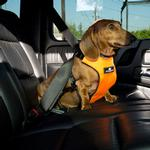 View Image 1 of Clickit Utilty Dog Harness by Sleepypod - Orange Dream