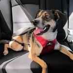 Clickit Utilty Dog Harness by Sleepypod - Strawberry Red