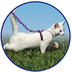 View Image 1 of Come with Me Kitty Harness & Bungee Leash - Black/Silver