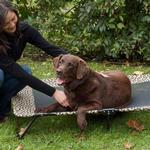 View Image 1 of Designer Pet Cot - Tan Bone