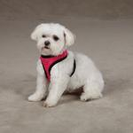 View Image 3 of Dimple Plush Dog Harness - Raspberry