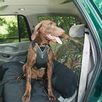 View Image 1 of Dog Auto Harness with Tether - Mossy Oak