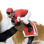View Image 2 of Dog Riders Harness Halloween Costume - Jockey
