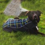 View Image 1 of Double Diamond Dog Coat - RC Plaid