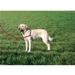 View Image 1 of Easy Walk Nylon Harness by Premier - Red