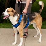 View Image 1 of EasySport Dog Harness by PetSafe - Blue
