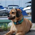 View Image 1 of Eco-Lucks Hampton Collection Dog Collar - Montauk