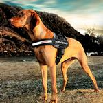 EzyDog Convert Dog Harness - Charcoal