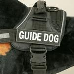 View Image 1 of EzyDog Convert Harness Custom Side Patches - Guide Dog