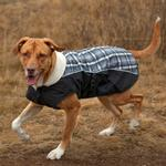 View Image 1 of EzyDog Mission Dog Coat - Gideon