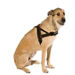 View Image 1 of EzyDog Quick Fit Dog Harness - Black