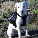 View Image 1 of EzyDog Summit Dog Backpack - Black/Charcoal