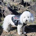 View Image 3 of EzyDog Summit Dog Backpack - Black/Charcoal