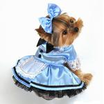 View Image 1 of Fantasy Alice in Wonderland Halloween Dog Costume