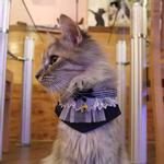 View Image 3 of Felix Cat Collar Scarf by Catspia - Navy