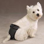 View Image 1 of Female Pup Pants - Black Polka Dot