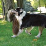 View Image 4 of GoDog Roadkill Dog Toy - Squirrel