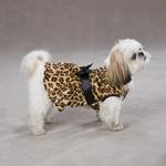 View Image 1 of Gold Print Leopard Dog Dress by Zack & Zoey