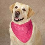 Guardian Gear Insect Shield Paisley Dog Bandana - Pink
