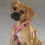 Guardian Gear Two Tone Pawprint Harness - Pink